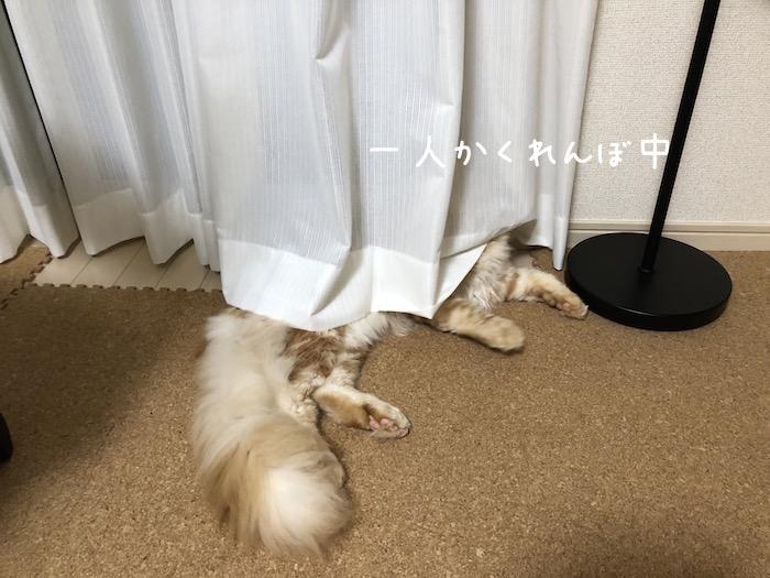 f:id:chikojirou:20180625220603j:plain