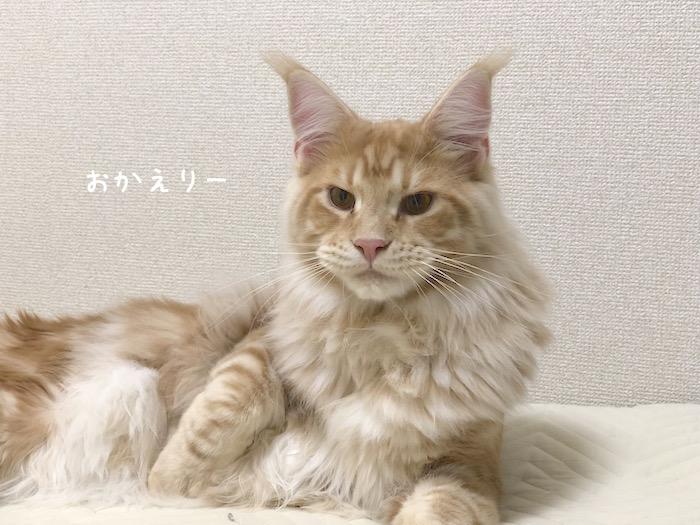 f:id:chikojirou:20180625220645j:plain