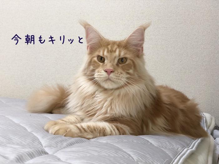 f:id:chikojirou:20180702215609j:plain