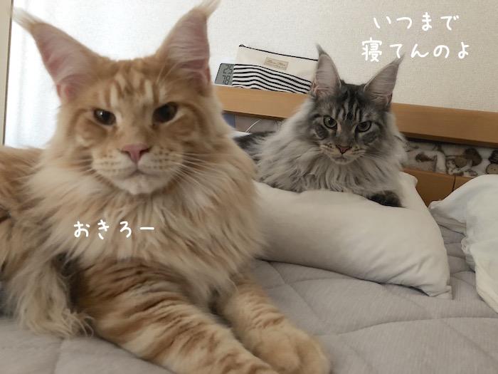 f:id:chikojirou:20180708195442j:plain