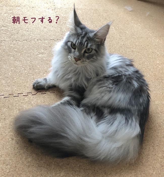 f:id:chikojirou:20180708195457j:plain