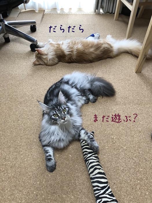 f:id:chikojirou:20180708200013j:plain