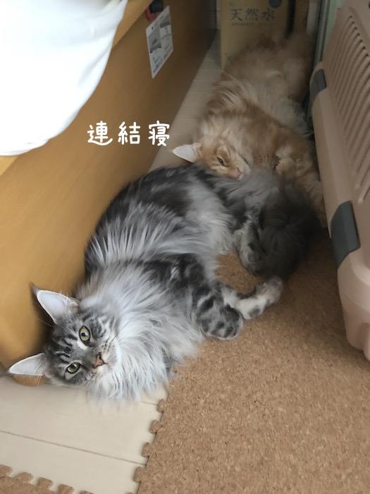 f:id:chikojirou:20180708200114j:plain