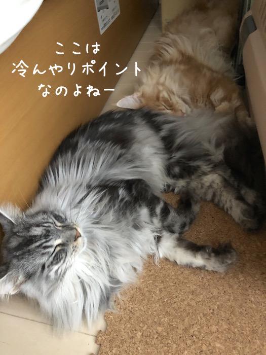 f:id:chikojirou:20180708200136j:plain