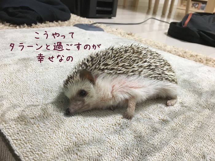 f:id:chikojirou:20180726230457j:plain