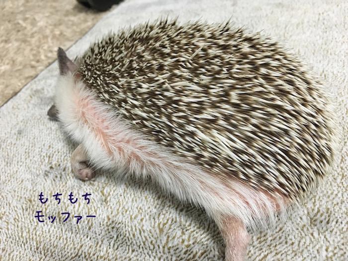 f:id:chikojirou:20180726230528j:plain