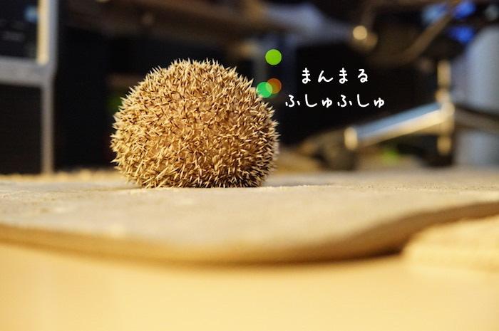f:id:chikojirou:20180726230712j:plain