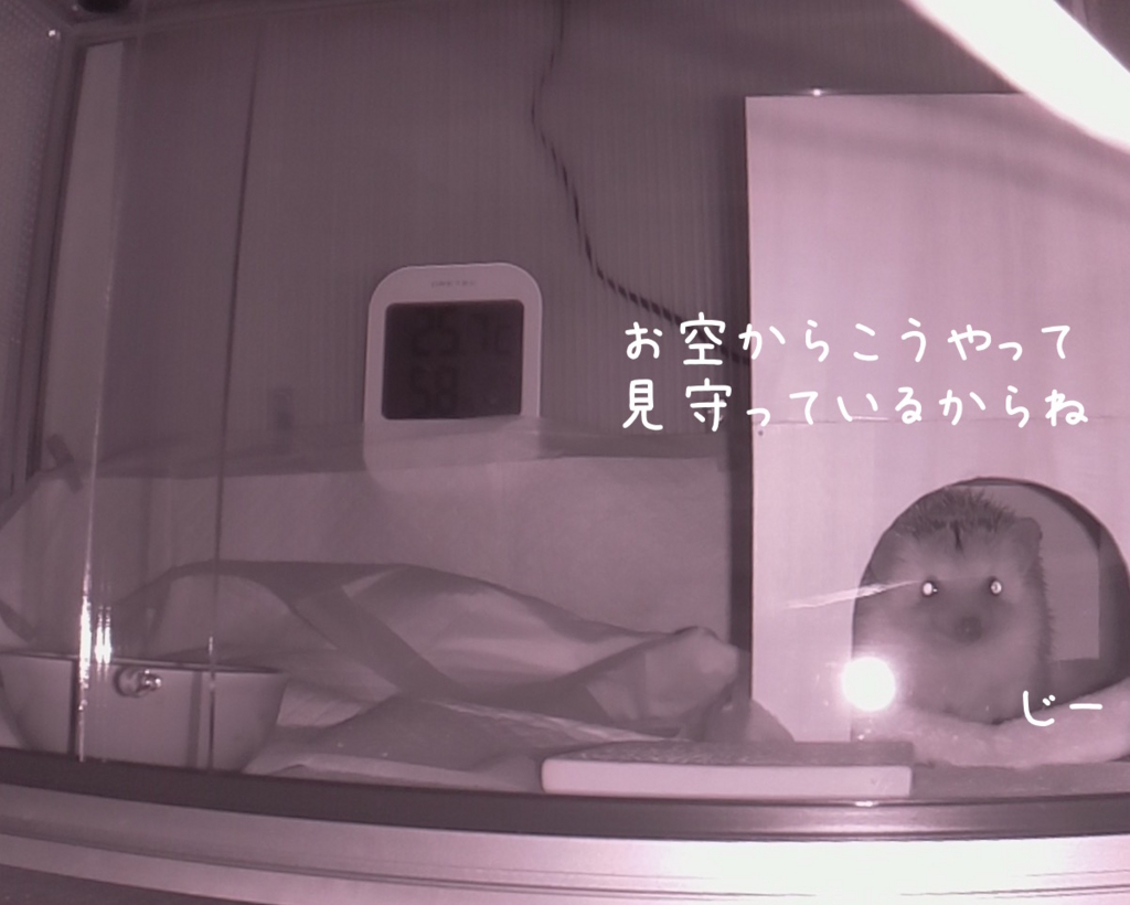 f:id:chikojirou:20180726231251j:plain
