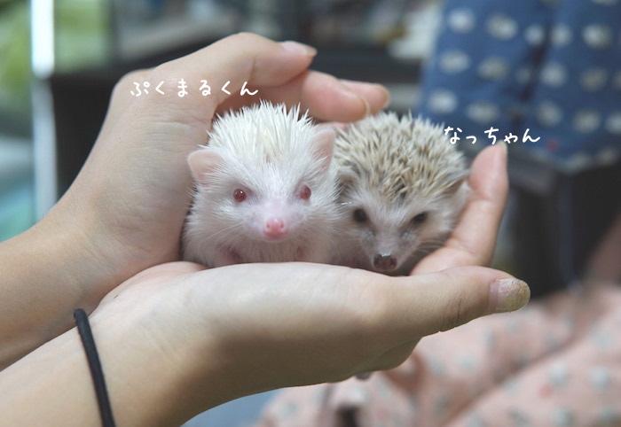 f:id:chikojirou:20180820221125j:plain