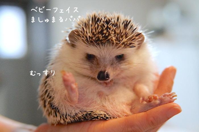 f:id:chikojirou:20180820221221j:plain