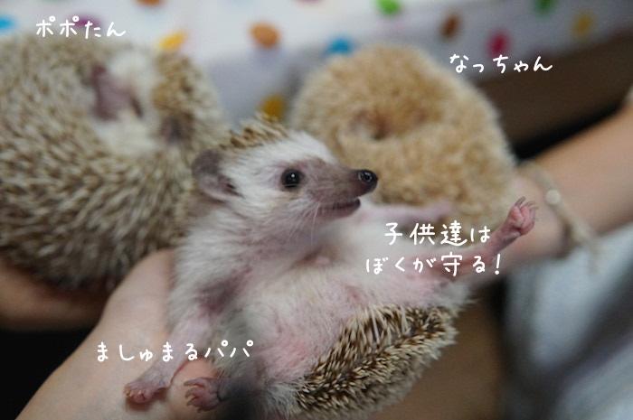 f:id:chikojirou:20180820221239j:plain
