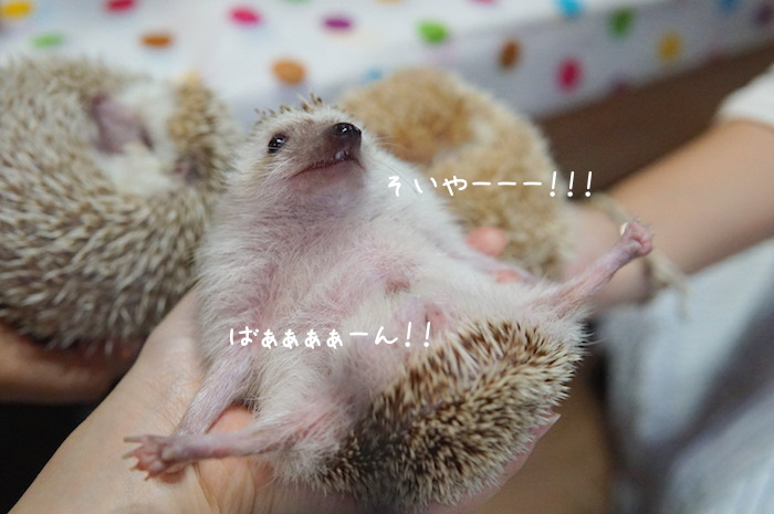 f:id:chikojirou:20180820221321j:plain