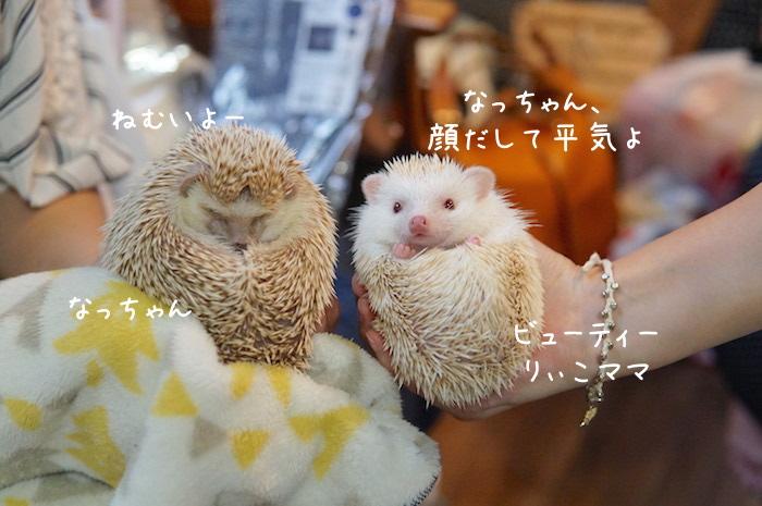 f:id:chikojirou:20180820221349j:plain
