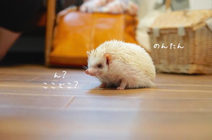 f:id:chikojirou:20180820221416j:plain