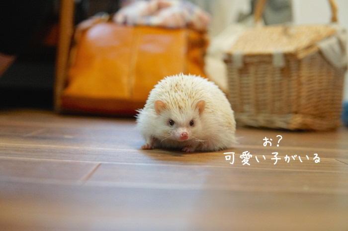 f:id:chikojirou:20180820221430j:plain