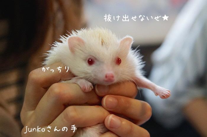f:id:chikojirou:20180820221613j:plain