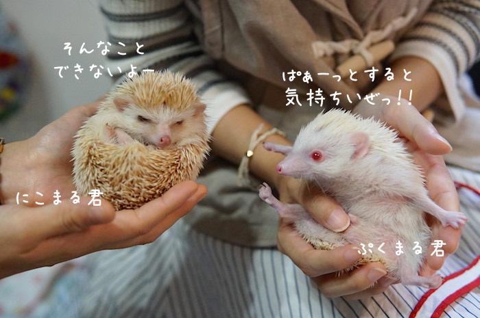 f:id:chikojirou:20180820221647j:plain