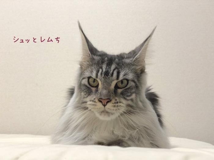 f:id:chikojirou:20180903215157j:plain