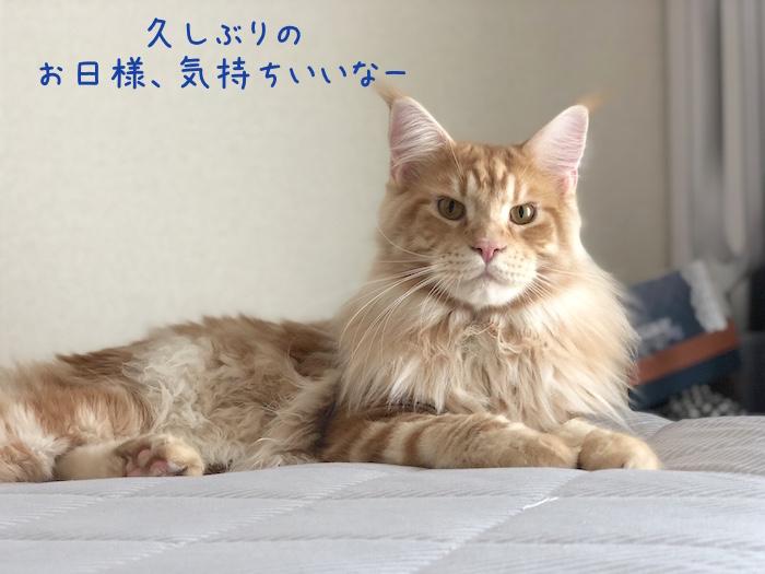 f:id:chikojirou:20180905214759j:plain