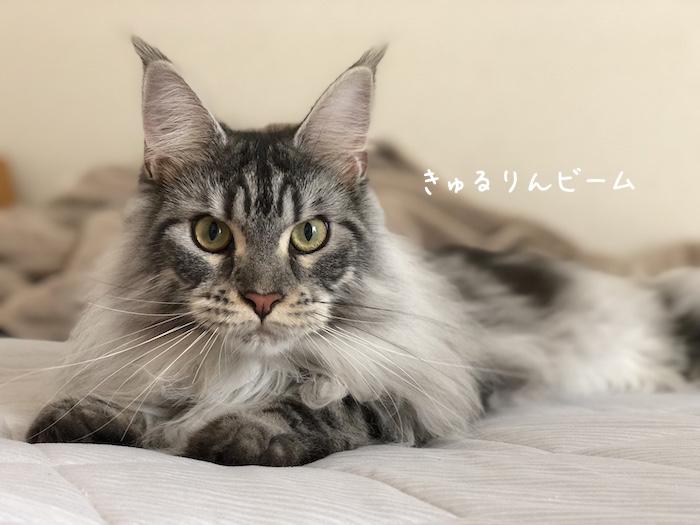 f:id:chikojirou:20180905214820j:plain