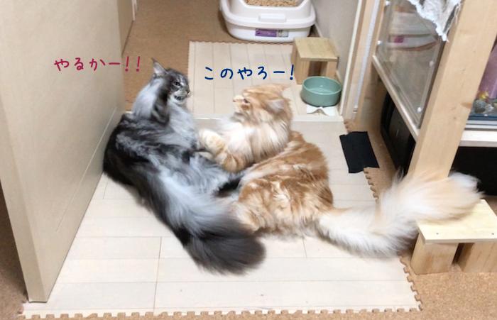 f:id:chikojirou:20180905214833p:plain