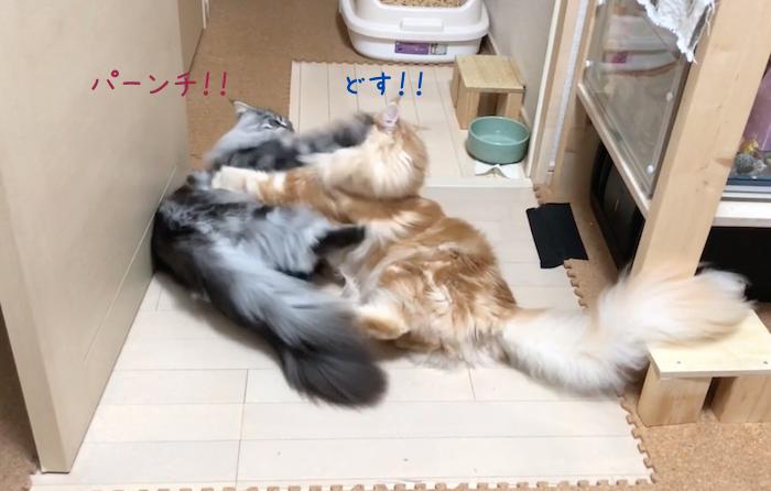f:id:chikojirou:20180905215156p:plain