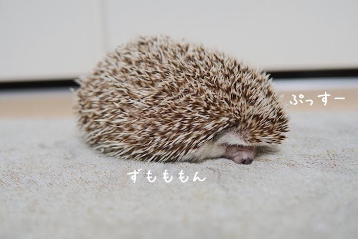 f:id:chikojirou:20181118202238j:plain