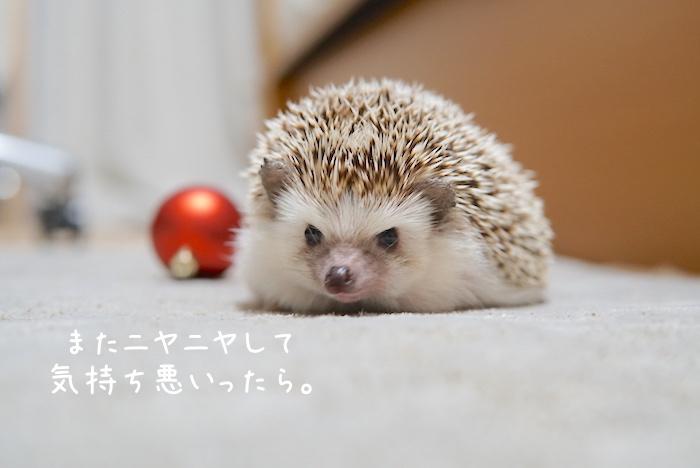 f:id:chikojirou:20181118202253j:plain