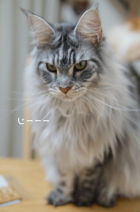f:id:chikojirou:20181118202907j:plain