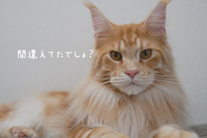 f:id:chikojirou:20190401212541j:plain