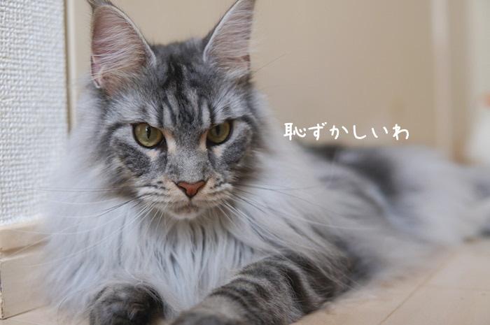 f:id:chikojirou:20190401212651j:plain