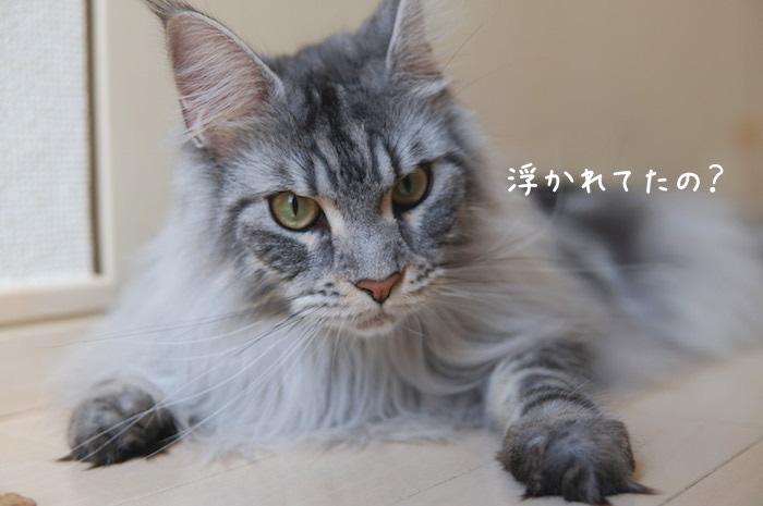 f:id:chikojirou:20190401212708j:plain