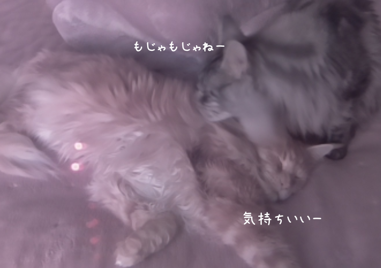 f:id:chikojirou:20190401212854p:plain