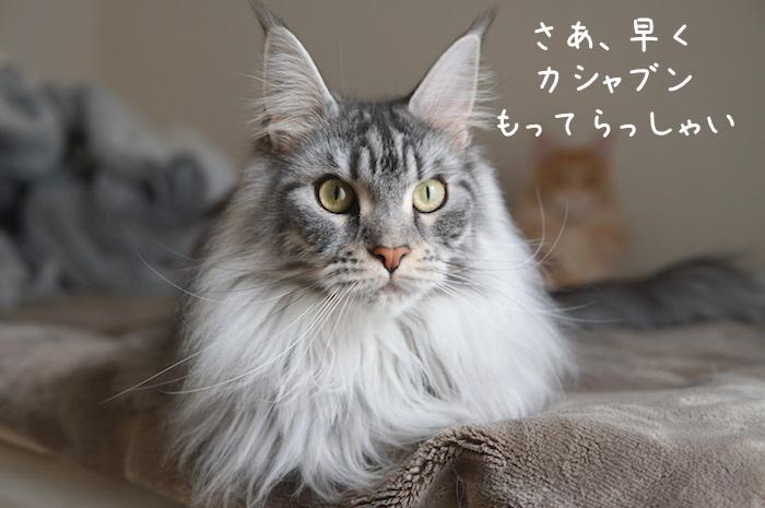 f:id:chikojirou:20190407210929j:plain