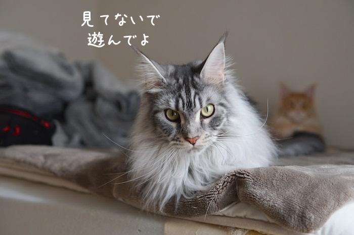 f:id:chikojirou:20190407211005j:plain