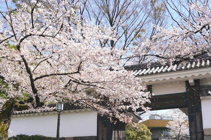 f:id:chikojirou:20190407211210j:plain