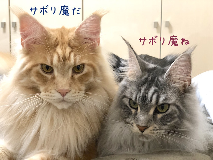 f:id:chikojirou:20190425213305j:plain