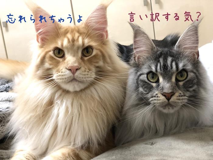 f:id:chikojirou:20190425213318j:plain