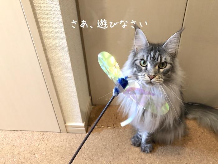 f:id:chikojirou:20190425213359j:plain