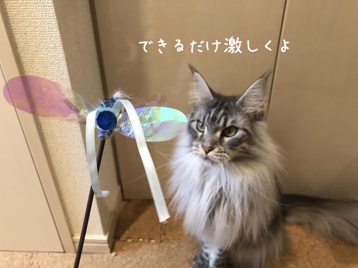 f:id:chikojirou:20190425213415j:plain