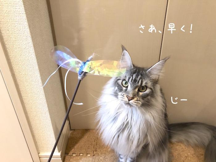 f:id:chikojirou:20190425213428j:plain