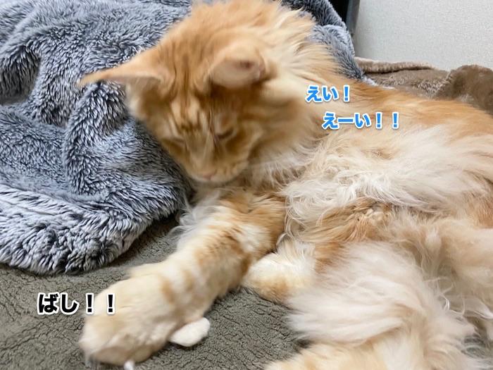 f:id:chikojirou:20200214211215j:plain