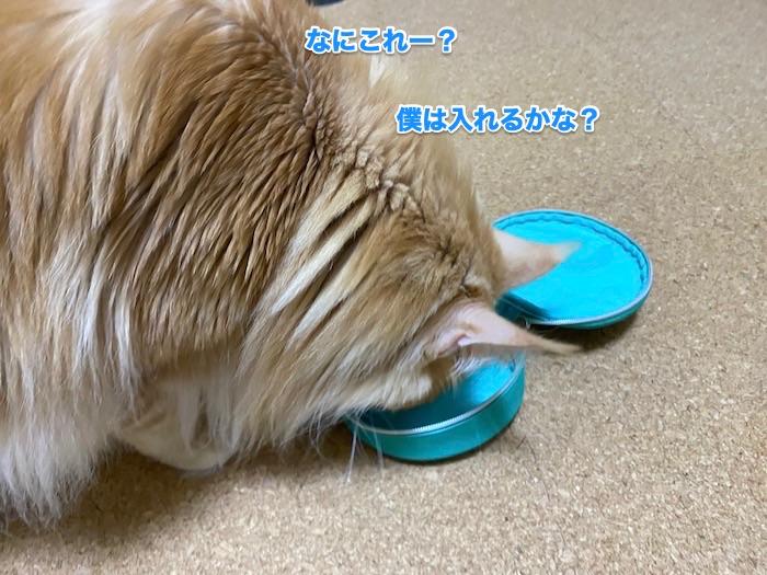 f:id:chikojirou:20200214211225j:plain