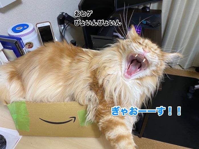 f:id:chikojirou:20200214211241j:plain