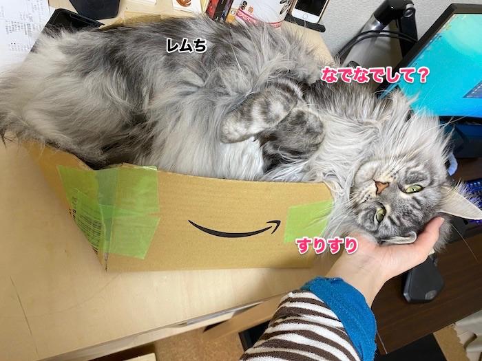 f:id:chikojirou:20200214211245j:plain