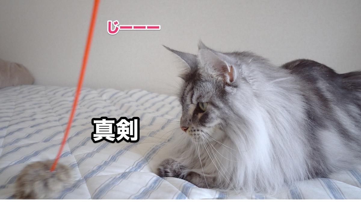 f:id:chikojirou:20200711223927j:plain