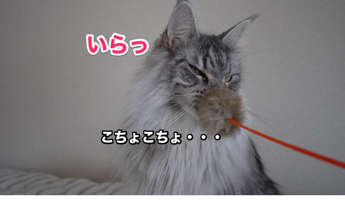f:id:chikojirou:20200711223930j:plain