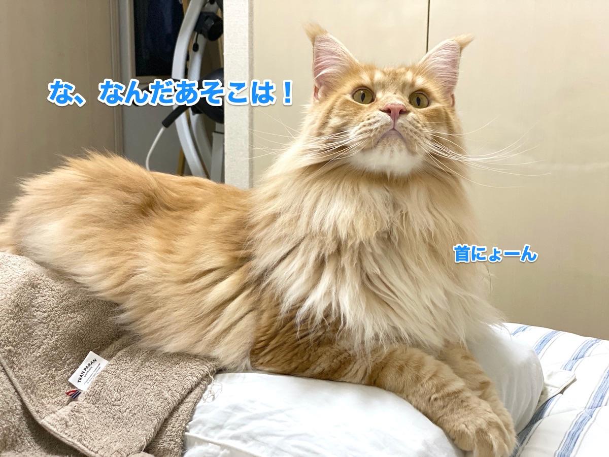 f:id:chikojirou:20200711223947j:plain