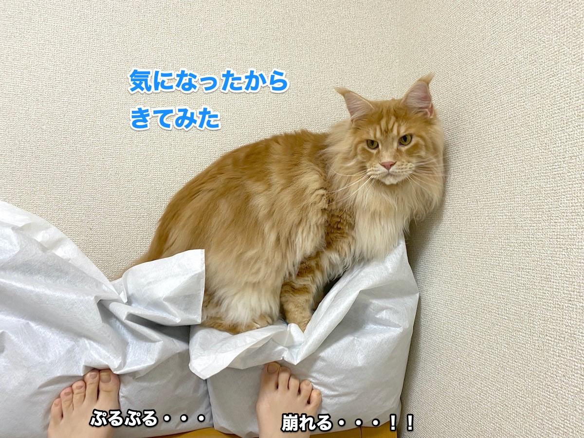 f:id:chikojirou:20200711223950j:plain