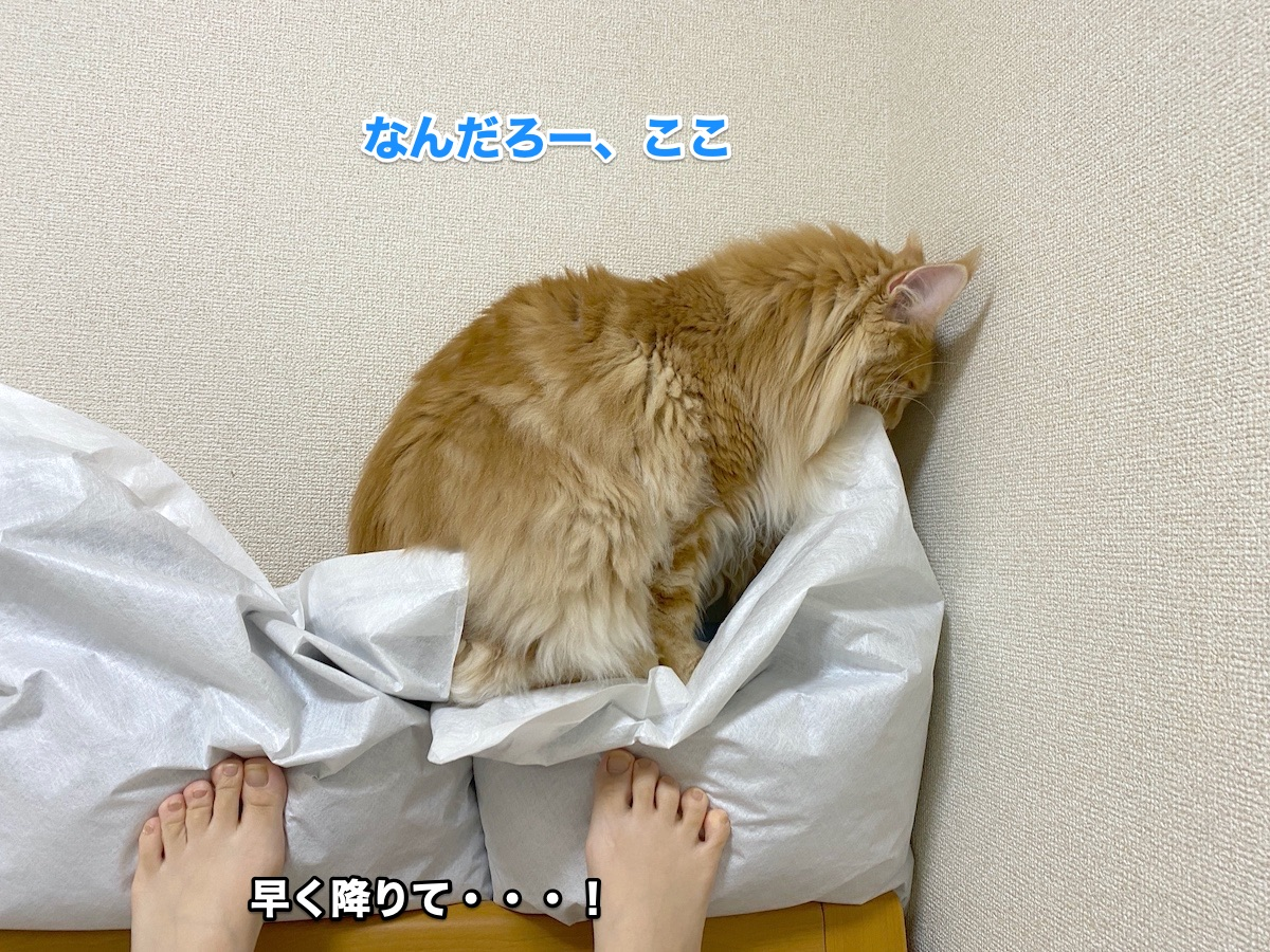 f:id:chikojirou:20200711223953j:plain